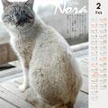 ノラネコ カレンダー 2014-2月