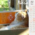 ノラネコ カレンダー 2014-10月