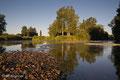 Donauzusammenfluss der Quellflüsse Brigach und Breg