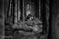 Im Wald: Erdmännchen
