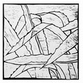 © Schidlo; Aloe vera, 2020; Linolschnitt , verlorene Form; sw