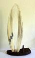 Fanon de baleine Japon - 32 cm
