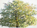We are all the leaves of one tree. The time has come for all, to live as one. Citaat Thich Nhat hanh. Geschilderd door Marian van Zomeren- van Heesewijk, acrylverf op linnen 60 x 80 cm.
