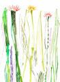 《草と花》♢ 紙に透明水彩、ペン、色鉛筆 294mm×210mm/2014