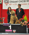 Wels BEST in Show