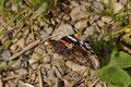 Ein Schmetterling macht Pause