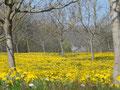 Noyers en Dordogne