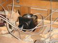 5)二階の洋室に天井用排気ファンを設置(屋根裏に排気後は、換気装置:FY-550で外に排気)