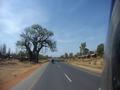Unter Baobabs