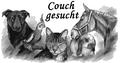Couch gesucht