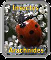 Insectes et arachnides