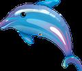 "Blue Dolphin Q 36"" - € 12,90"