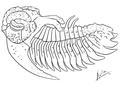 Hoplolichoides conicotuberculatus