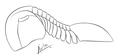 Illaenus sarsi