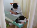 腰痛治療・ぎっくり腰・坐骨神経痛治療