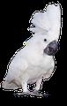 Der Vogel mit der weißen Weste
