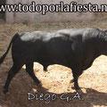Nº 34 Lidiado en 1º lugar por Pablo Hermoso de Mendoza