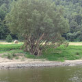 Spuren des letzten Hochwassers