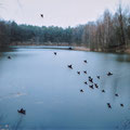 "Ramona Czygan  | ""Black Birds over silent lake""  