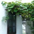 中庭の葡萄棚