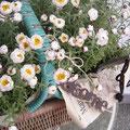 3月 花かんざしがsucreの春一番