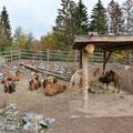 Zoo Zürich, Mongolische Steppe