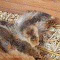 Küken aus Froscherl's Nest