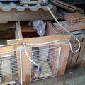 Conejera con duplex - Clapier en duplex