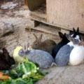 Conejos en el parque - Lapins au parc