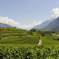 南フランス、ローヌ地方の自然豊かなぶどう畑