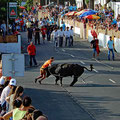 Bull running in Praia do Vitoria