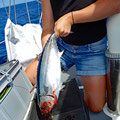 White tuna :-)