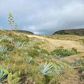 ...trough steppe like landscapes...