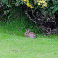 Taking a break on the lawn beside rabbits before cycling back the 12 kilometers