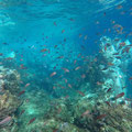 Snorkeling in a natural pool