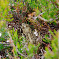 Hidden tree frog in the bog