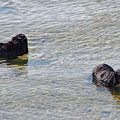 Seals seeking for cooling - with 23° its quiet warm