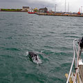 Welcomed by bottlenose dolphins