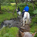Crossing pastures, creeks and shooing sheeps