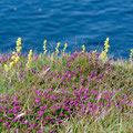 Flowers along the cliffs