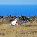 ...past more cows to the coast of Anjos