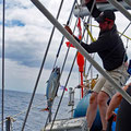 Catching a white tuna