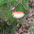 Mushrooms around every corner