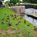 Duck-meeting