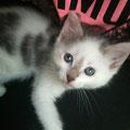 Pepita (2 mois et demi) 03 Juillet 2014