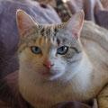 Leïla (2 ans)05 juin 2014