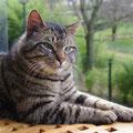 Mowgli (2 ans) 16 mars 2014