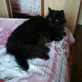 Milord (6ans) adopté le 15 Avril 2016
