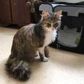 Lorya adoptée le 30 Juin 2016