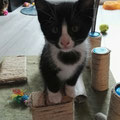 Loulou 2 mois adopt le 02 Juillet 2016